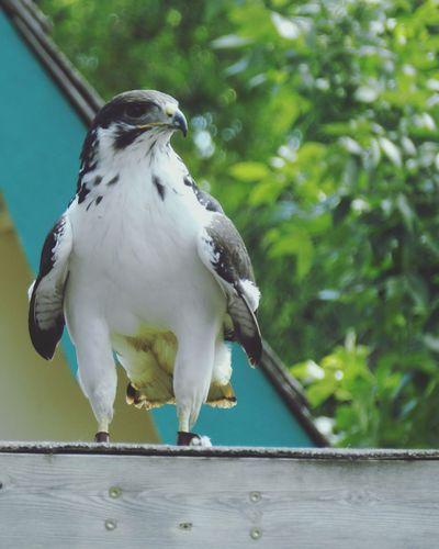 EyeEm Best Shots - Macro / Up Close Animal_collection Animal Photography Bird Photography Birds Of EyeEm  Birds🐦⛅