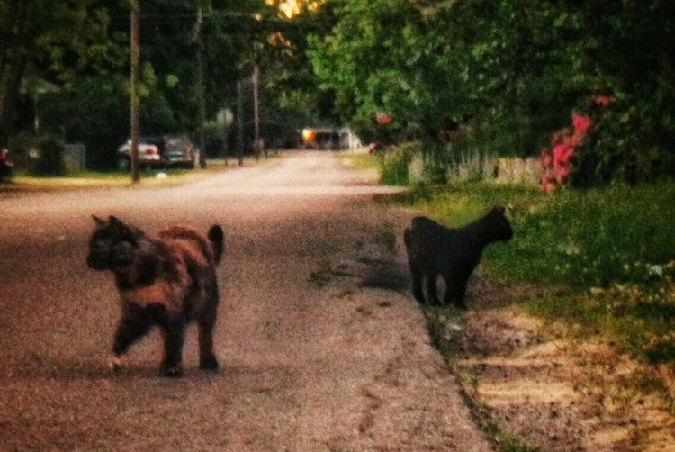 The gang The Week On Eye Em Cats Everybodystreet Flowers Neighborhood Stroll Hanging Out EyeEm Best Shots