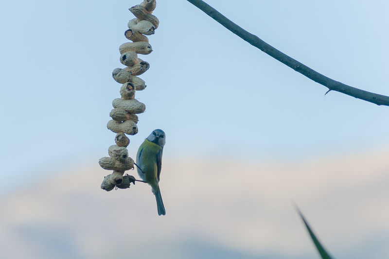 Low angle view of parrot perching on plant against sky