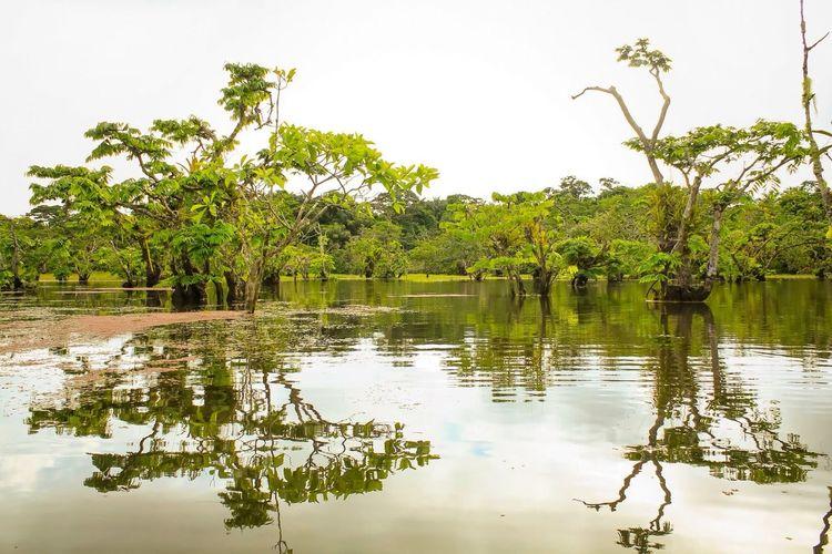Mi Ecuador Cuyabeno Sucumbios Reserve