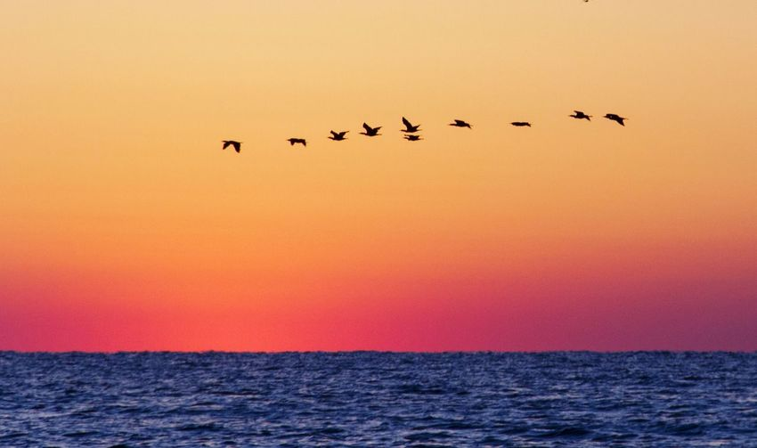 Life Is A Beach Hello World Relaxing Enjoying Life Sunrise Cormorants Birds_collection Holydays Black Sea 43 Golden Moments Fine Art Photography On The Way Colour Of Life
