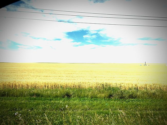 Wheat Wheat Field Golden Blue Sky Big Sky Big Sky Country Explorealberta Canada Roadtrip Golden Fields