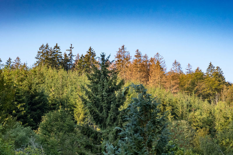 Plants and trees in forest against clear blue sky