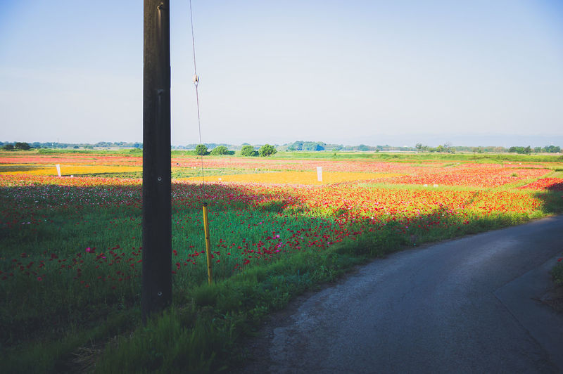 Scenic view of field by road against sky