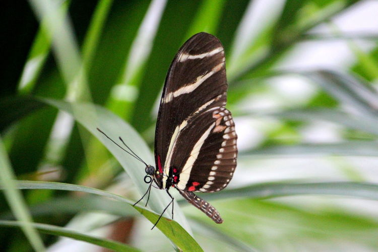 Animal Animal Markings Animal Themes Animal Wildlife Animal Wing Animals In The Wild Beauty In Nature Butterfly Butterfly - Insect Close-up Day Focus On Foreground Insect Invertebrate Leaf Nature No People One Animal Outdoors Plant Plant Part