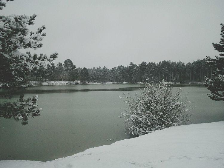 Winter Snow Hollidays Nature White CenterParcs Sologne France Landscape
