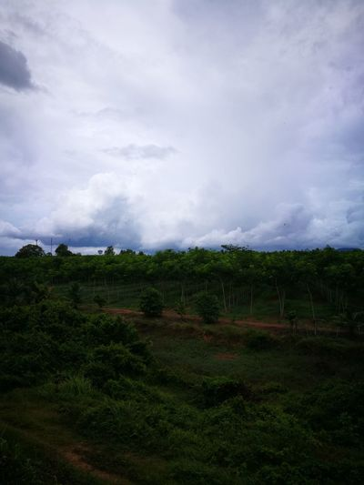 when the clouds seem so closed.. Eyeemphotography Short Vacation/taking A Break/being A Tourist Tree Irrigation Equipment Agriculture Rural Scene Tea Crop Field Sky Landscape Cloud - Sky