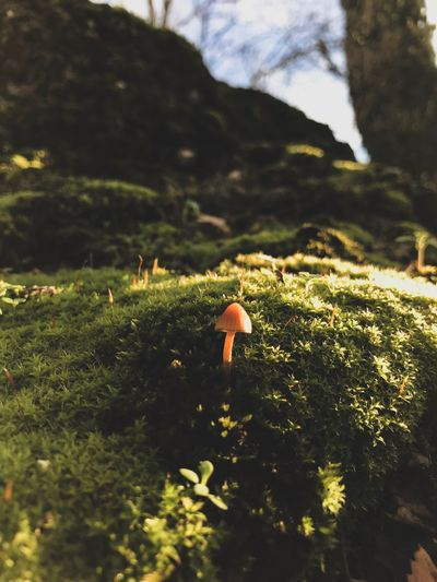 Nature Beauty In Nature Outdoors Growth Mushroom Grass No People Moss