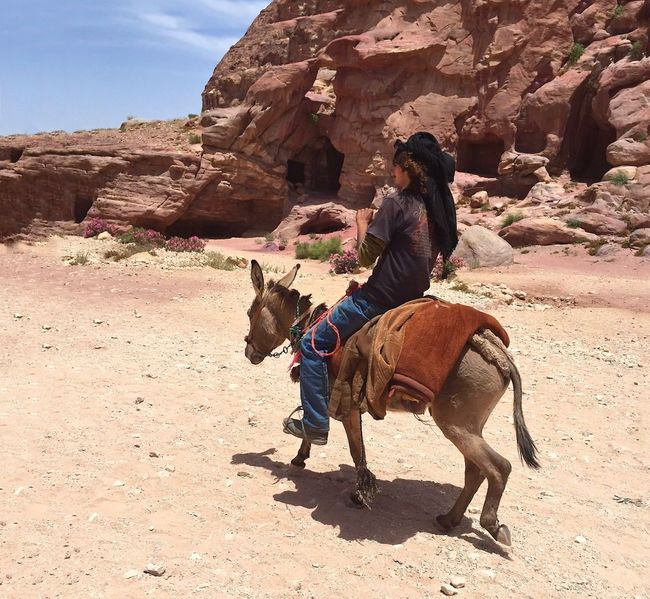 324 / 365 Animal Themes Archeological Arid Climate Asno Borrico Brown Burro Day Desert Domestic Animals Donkey History Jordan Mammal Outdoors Petra Rock Formation Rocks Seeing The Sights