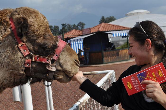 Camello Hermosa❤