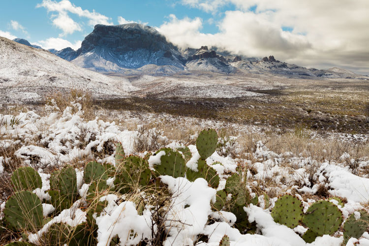 Chihuahuan desert snow and Chisos Mountains in Big Bend National Park, Texas, USA Cold Temperature Beauty In Nature Winter Snow Mountain Nature No People Landscape Non-urban Scene Outdoors Chihuahuan Desert Chisos Mountains Big Bend National Park Texas Cacti Desert Freezing Frost Rugged Terrain Rugged Southwest  American USA Wilderness Wild