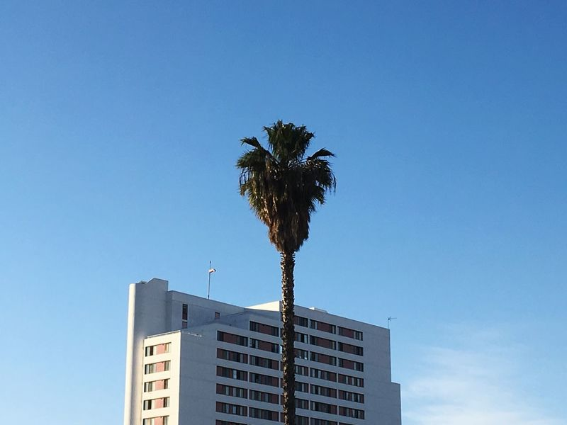 Palm Tree Low Angle View Clear Sky Building Exterior Architecture Tree Blue Outdoors EyeEm EyeEm Gallery Losangeles California EyeEmNewHere Sommergefühle
