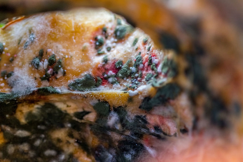 Close-up No Freshness Selective Focus Extreme Close-up Vegetable Beauty In Nature Macro Pumpkin Mold Fungus Fungus 🍄 Mucus  Slime Slimy Slime Mold Old Mouldy Food Mouldy Fruit Mouldy Mould Fungus