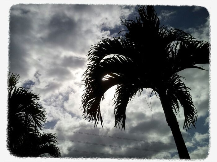 Clouds Light Sky Trees Sunlight Clouds And Sky Palm Trees Aiea