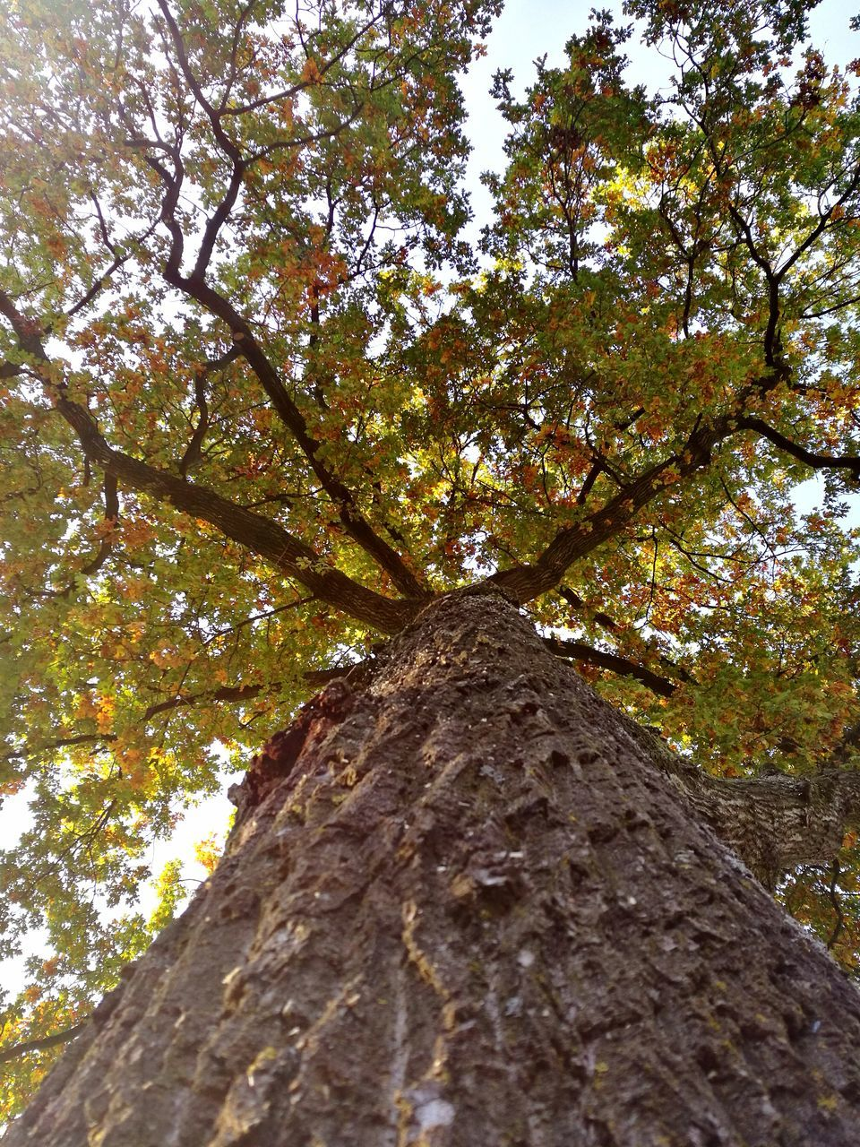 tree, low angle view, tree trunk, nature, growth, branch, beauty in nature, outdoors, day, no people, autumn, tranquility, sky, close-up, freshness