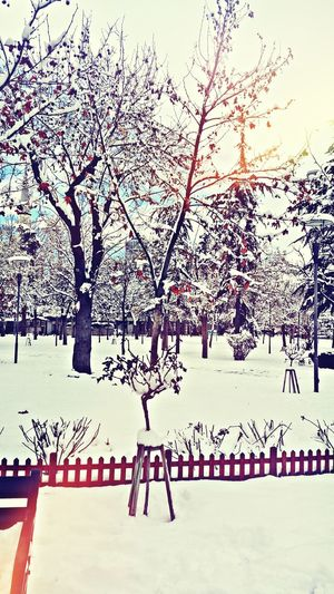 Snow ❄ Popular Photos First Eyeem Photo Favorite Life