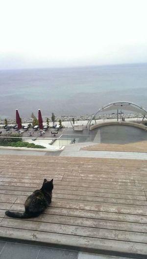 Kedi ile ben😎 Sahilde Kedi Kahvaltikeyfi Bulutlu Bir Gun Sakinlik Sessizlik Deniz