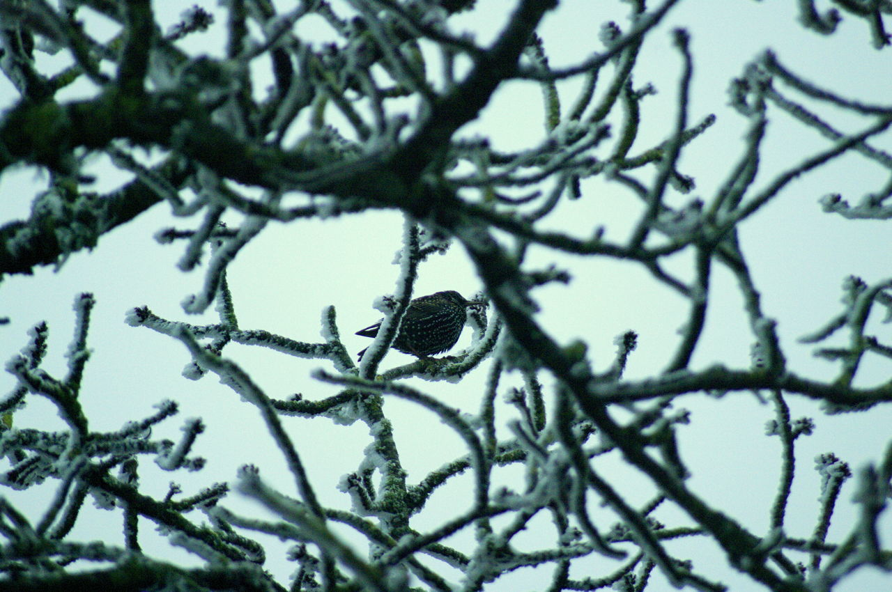 branch, tree, nature, winter, no people, beauty in nature, growth, day, cold temperature, outdoors, low angle view, snow, close-up, sky