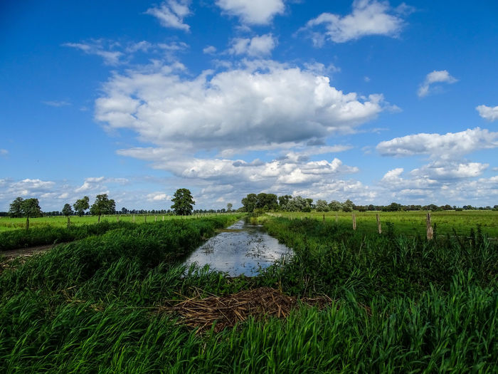 Channel Rhinluch Agriculture Beauty In Nature Field Grass Landscape Nature Sky Tranquil Scene Water