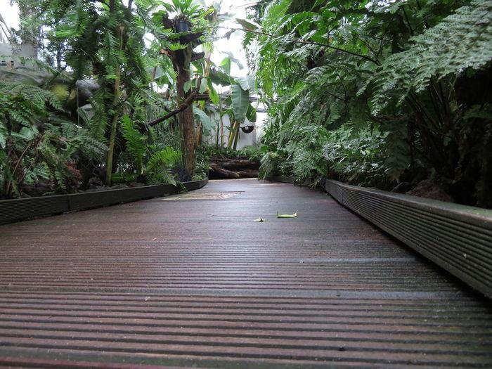 Path Plant