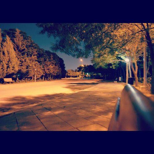 Erbil Hawler Erbilpark Park Samiabdulrahmanpark Samiabdulrahman Kurdistan Zhian Tree Benche Alone