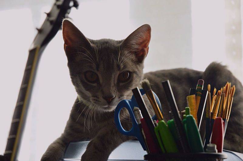 Portrait of cat resting on table by stationery at home