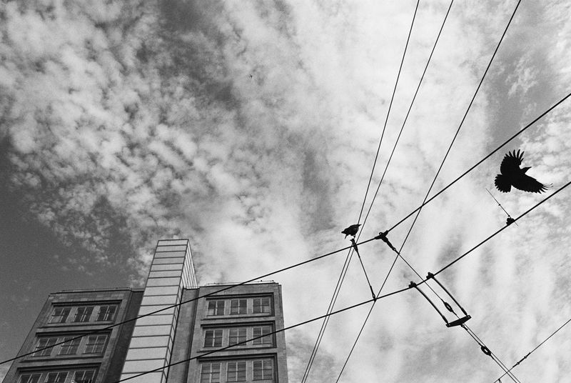 high-flying... Lookingup The Devil's In The Detail Analogue Photography Film Flying High Nikon FA Schwarz & Weiß Animal Themes Animals In The Wild Architecture Bird Blackandwhite Building Exterior Built Structure Cable Cloud - Sky Day Flying Bird Flying In The Sky Low Angle View Monochrome Outdoors Sky Tramway Rail Alexanderplatz Black And White Friday