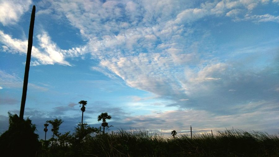 Nature Tree Sky No People Cloud - Sky Beauty In Nature Growth Archival Plant Low Angle View Outdoors Day Rural Scene Road Side View Rural Rural Landscape Road Side Landscape Dusk Sunset