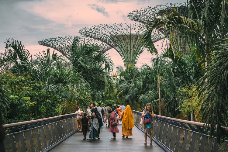 People walking on footbridge by palm trees against sky