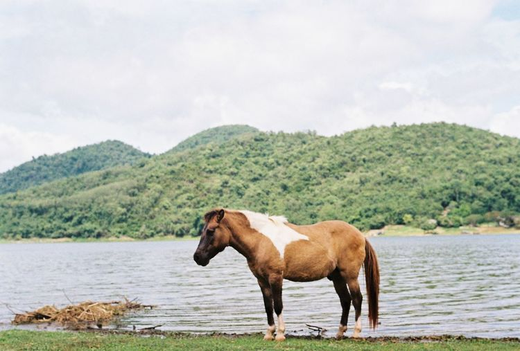 Horse standing in a lake against sky