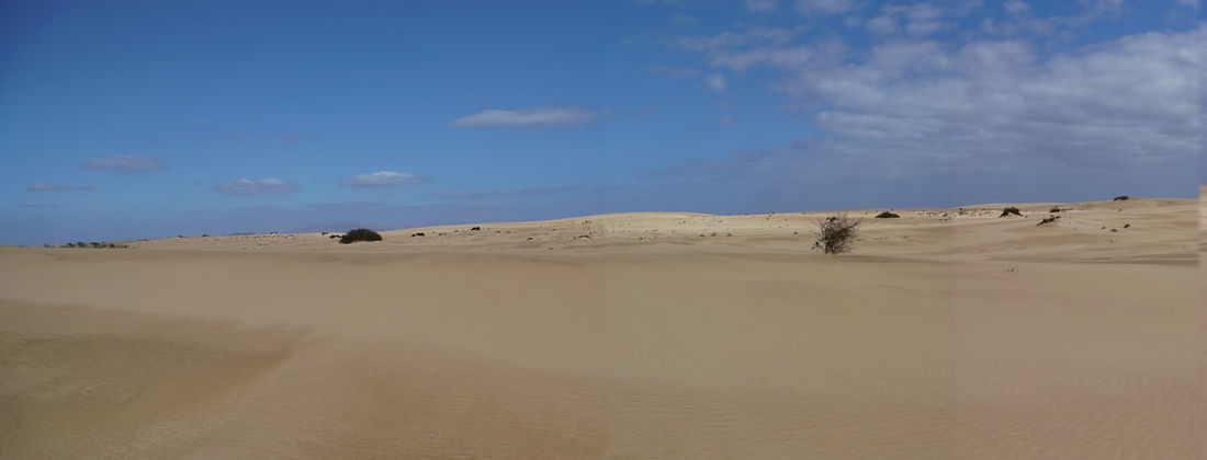 cpano Fuerteventura Arid Climate Beauty In Nature Blue Cloud - Sky Day Desert Landscape Mammal Nature No People Outdoors Pano Panoramic Photography Sand Sand Dune Scenics Sky Sunlight Tranquil Scene Tranquility