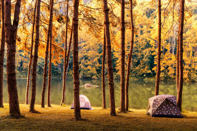 Autumn Beauty In Nature Day Forest Landscape Nature Outdoors People Sunlight Sunset Tree Tree Trunk Two People WoodLand