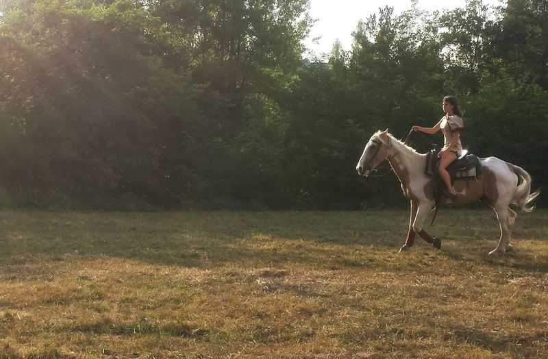 Nature Outdoors Rural Scene Country Fair Day Horse Horses Cavalli Cavalier  Cheval Chevaliers