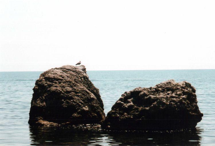 35mm Beauty In Nature Bird Blue Colour Of Life EyeEm Nature Lover Film Idyllic Mju2 Mjuii Nature No People Olympus Outdoors Real Sea Seascape Sky Summer Summertime Unusual Water Wildlife Wildness