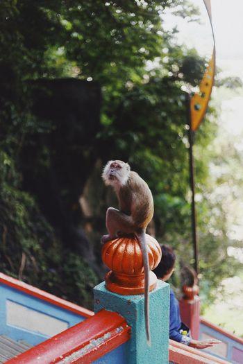 Monkey sitting on railing against trees