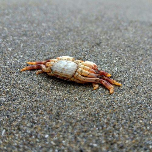 Life Oregon Nature Death Beach Crab
