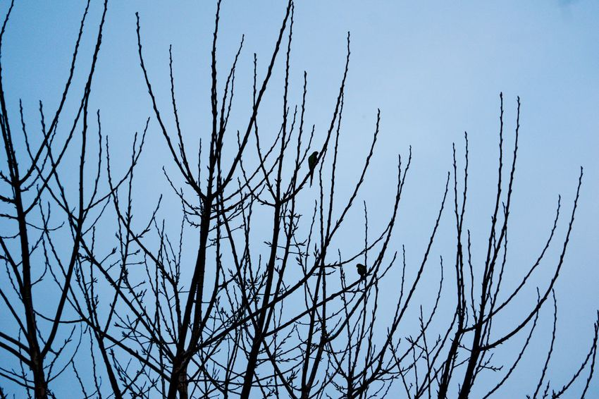 a picture of small birds standing in big brances in a park in a greek town Afternoon BIG Beak Natural Beauty Quiet Moments Small Business Thessaloniki Tranquility Avian Big Brances Birds Blue Blue Sky Branch Forest Greece Nobody Outdoors Peaceful Puttside Silence Sky Small Birds Springtime Trunk