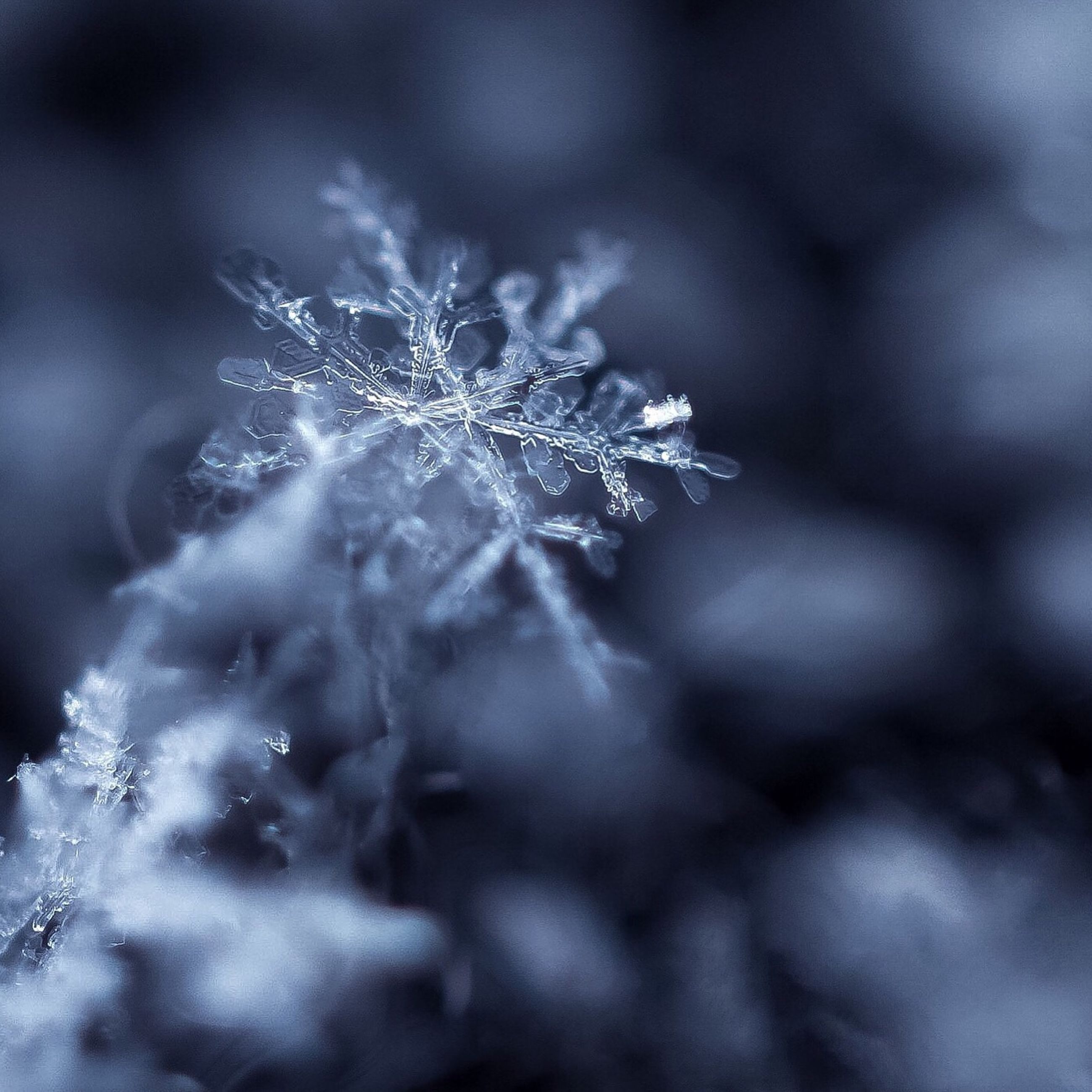 winter, cold temperature, snow, snowflake, close-up, nature, weather, frost, beauty in nature, frozen, no people, ice crystal, outdoors, snowing, fragility, spider web, day