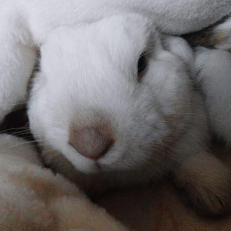 Rabbits Rabbit Bunnylove Bunnys Hello World Capture The Moment EyeEm Best Shots Rabbitsofinstagram