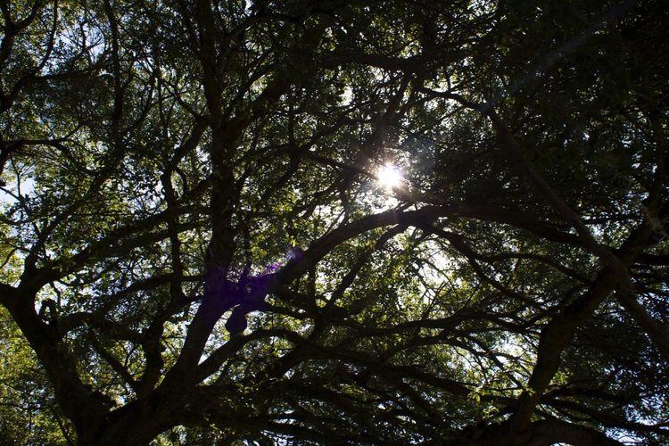 Tree Branches Leaves Light Sun Through Trees Sun Through The Trees Shadows Nature