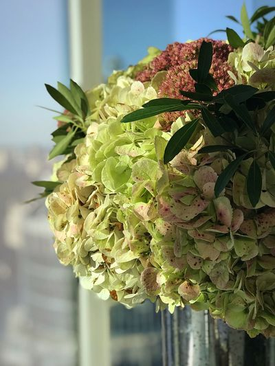 Leaf No People Freshness Day Growth Flower Green Color Focus On Foreground Close-up Outdoors Beauty In Nature Plant Nature Healthy Eating Food Fragility Flower Head Architecture City Skyscraper Freshness Cityscape Window Bloomberg Building Bouquet