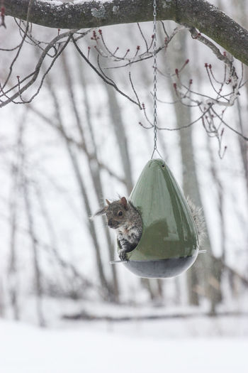 Animal Themes Animals In The Wild Bird Branch Close-up Cold Temperature Day Growth Hanging Mammal Nature No People One Animal Outdoors Snow Tree Winter