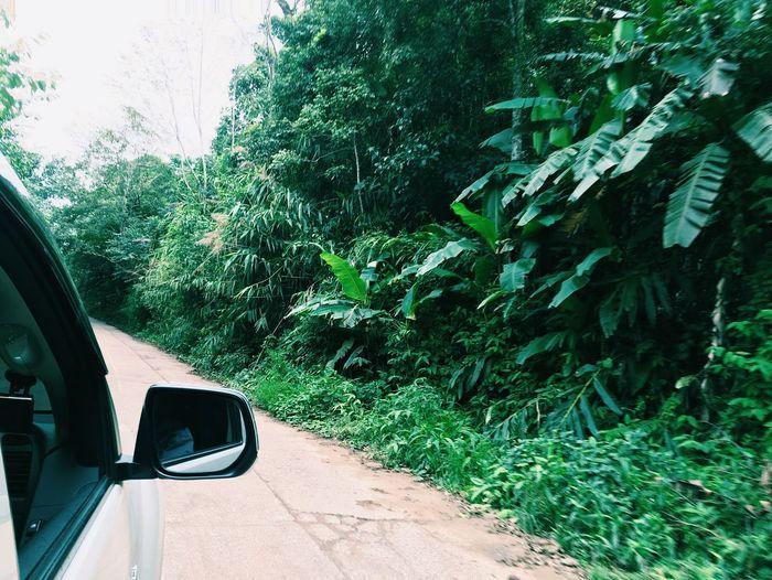 Tree Car Day