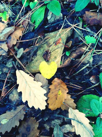 Heart nature Nature Nature_collection EyeEm Nature Lover Naturelovers Beautiful Nature Nature_perfection Iheartnature Nature Photography A Walk In The Woods Woods Autumn🍁🍁🍁 Autumn Leaves Leaves Heart Leaves