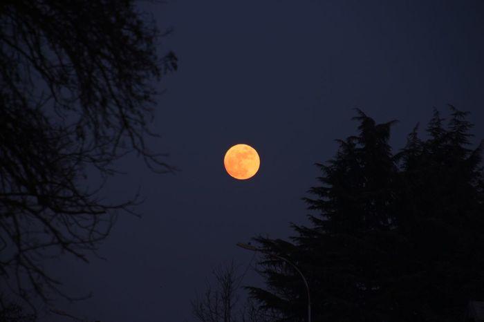 23.01.2016 Luna Piena Luna Moon Moonlight Luna Di Sera LaMiaLuna LunaDiGi Alberi
