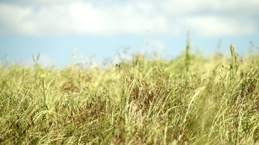 Feld mit Gras