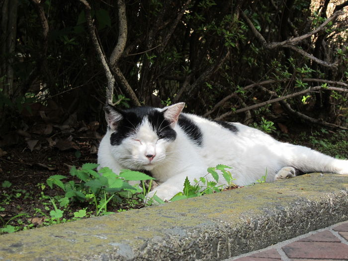 Animal Cat Cat Lovers Day Domestic Cat Grass Nature No People Outdoors Relaxation Stray Animal Stray Cat
