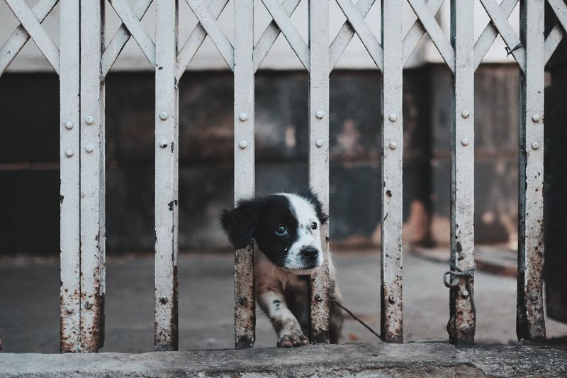 Puppy looking away amidst metal gate