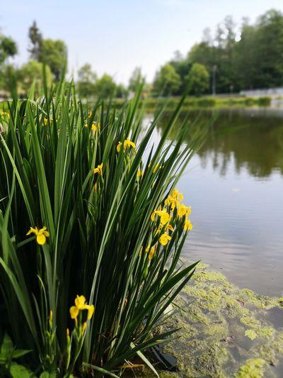 Flower Flower Head Water Springtime Summer Close-up Sky Plant Grass