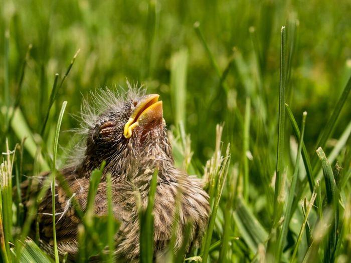 Fallen Nature Animals Macro Birds